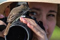 Flycatcher Bird at James Bay