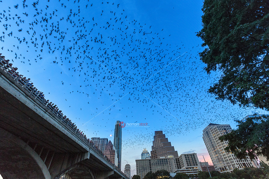The Austin American-Statesman created the Statesman Bat Observation Center adjacent to the Congress Bridge, giving visitors a dedicated area to view the nightly emergence. It is estimated that more than 100,000 people visit the bridge to witness the bat flight, generating millions of dollars in tourism revenue annually.