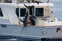 This swordfish, Xiphias gladius, is being hauled onboard after being incapacitated with a shotgun. Catalina Island, California, USA.