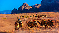 Bedouin men and their camels, Arabian Desert, Wadi Rum, Jordan.