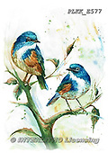 Kris, REALISTIC ANIMALS, REALISTISCHE TIERE, ANIMALES REALISTICOS, paintings+++++,PLKKE577,#a#, EVERYDAY ,birds