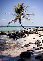 A single palm tree extends over the clear waters of Little Corn Island of the coast of Nicaragua in April, 2009.