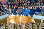 SUPREME: Winner of the Supreme Champion at the Christmas Fat Stock Show and Sale on Monday at The Kingdom Mart Tralee, was Maurice Griffin Banna,Ardfert and he was presentedd with the Supreme by Hauley Kerins (FBD Insur sponsores), l-r: Philip Healy (manager), Hauley Kerins (FBD Insur), Maurice Griffin (owner), Paul Mullaney and Ger Kelly (judges) and Mark Collins (buyer for Slaney Foods,Bunclody).