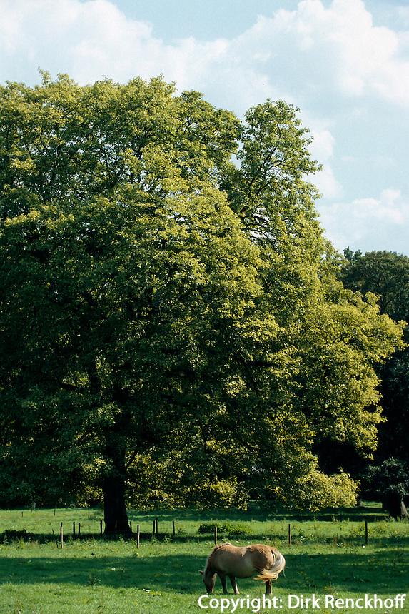 Belgien, Flandern, Park von Schloss Hex im Haspengau