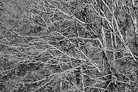 Oak Trees, Smoky Mountains National park, Tennesse