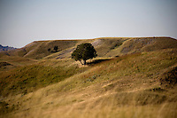 A tree stands on a hillside in Badlands National Park in South Dakota, USA.