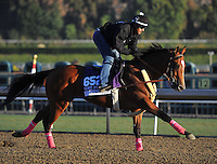 Goldencents, trained by Doug O'Neill, trains for the Breeders' Cup Dirt Mile at Santa Anita Park in Arcadia, California on October 30, 2013.