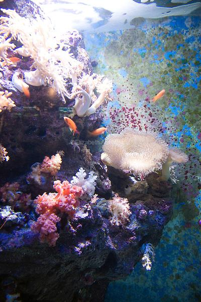 The Freshwater Life display at the Okinawa Churaumi Aquarium at Ocean Expo Park.