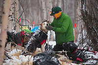 Brazilian musher Luan Ramos Marques pets one of his dogs as he rests at the halfway checkpoint of Iditarod on Saturday March 9, 2013...Iditarod Sled Dog Race 2013..Photo by Jeff Schultz copyright 2013 DO NOT REPRODUCE WITHOUT PERMISSION