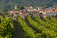 France, Aude (11), Cucugnan,  le village et son vignoble  //France, Aude, Cucugnan, the village and its vineyard