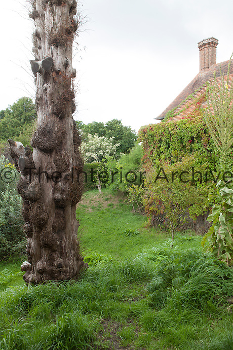 A gnarled tree grows in a corner of Great Dixter