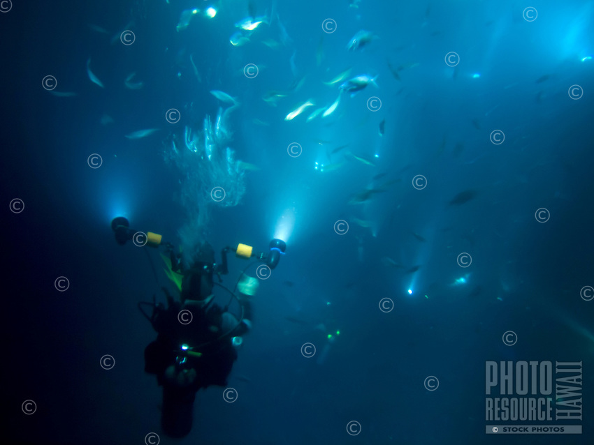 A scuba diver films manta rays feeding on fish at night, Big Island.