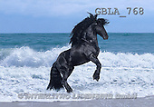 Bob, ANIMALS, collage, horses, photos(GBLA768,#A#) Pferde, caballos