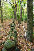A stone wall at Friedsam Town Forest in Chesterfield, New Hampshire during the autumn months.