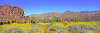Desert Scenics, Andreas Canyon, Palm Springs, California