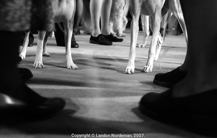 NEW YORK - FEB 10:  Handlers and Hounds await the juding of the Hound Group at the 128th Annual Westminster Kennel Club Dog Show at Madison Square Garden in New York City on Tuesday February 10, 2004. (Photo By Landon Nordeman)
