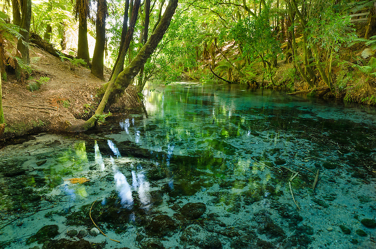 Native bush along the edge of the crystal clear waters of Hanamura Springs near Rotorua, North Island, New Zealand - stock photo, fine art, canvas print - stock photo, canvas, fine art print