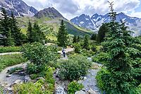France, Hautes-Alpes (05), Villar-d'Arène, jardin alpin du Lautaret, la zone des plantes d'Amérique du Nord, au loin de gauche à droite, la Pyramide de Laurichard, La Meije