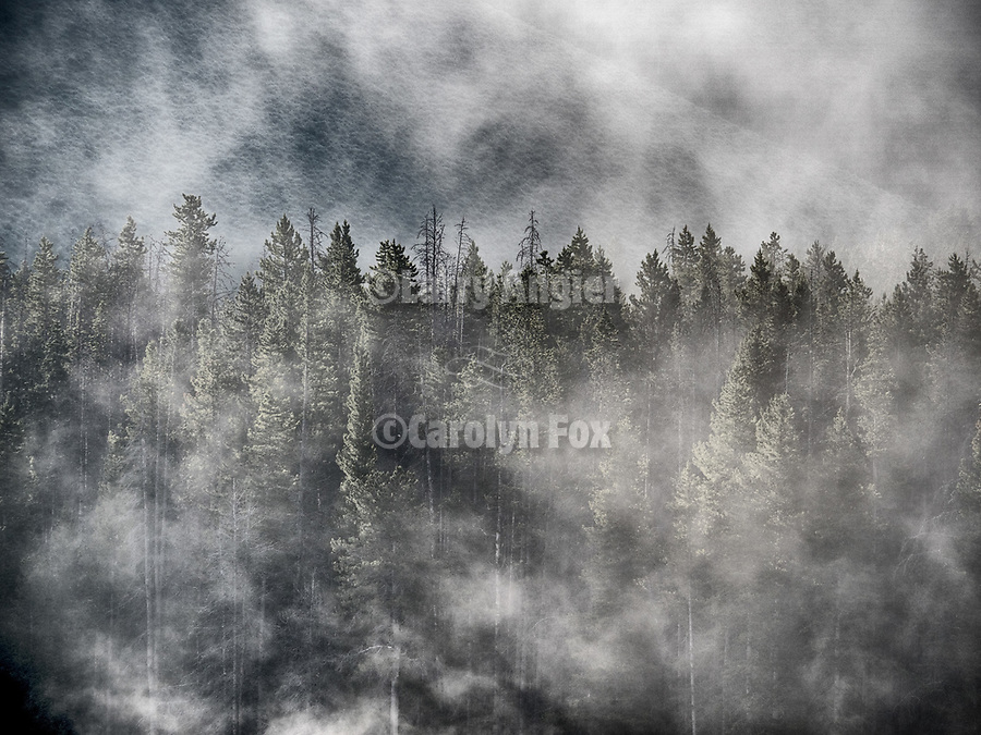 Fog in the forest along the Big Hole River near Wise River, Montana.