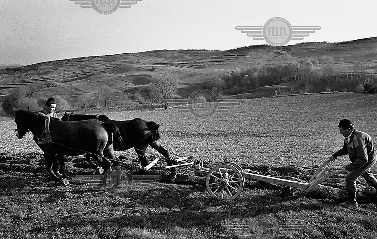 A man works in a field using horses to pull the plough, Maramures.