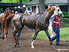 Oman Whata Kiss in the paddock at Delaware Park on 5/30/15