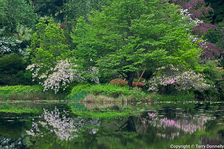 Woodinville, WA<br /> Spring garden reflections in the Welch Sanctuary