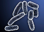 Salmonella typhimurium Bacteria cause salmonellosis, one of the most common forms of foodborne illness. SEM