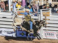 Campeonato  #Rodeo 2016 #BullRiders