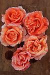 Five orange blooms of Rose or Rosa Sallys standing in wooden rack on wooden board