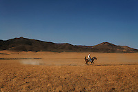 A rider works with a headstrong mount as he trains his mustang kicking up a small cloud of dust in the dry Nevada desert. <br />