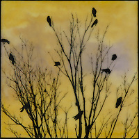 Family tree of crows transferred over encaustic painting of yellow and purple sky.