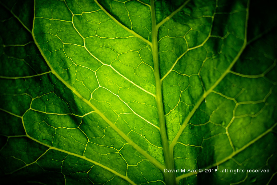 12.1.16 - Broad Leaf....