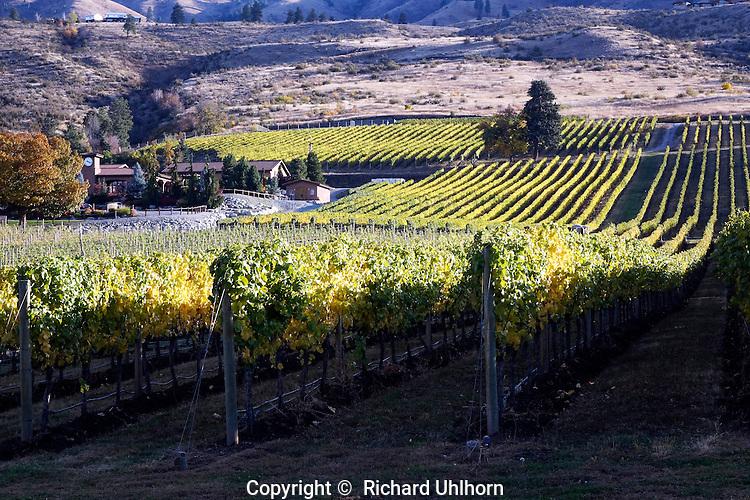 Fall colors at Tsillan Cellars vineyard on the southshore of Lake Chelan.