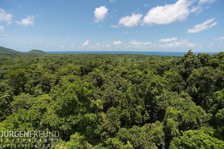 From the vantage point of the Daintree rainforest canopy. JCU's Daintree Rainforest Observatory has a Liebherr  freestanding construction tower crane which allows researchers to explore the rainforest, from the atmosphere above the canopy, through its different levels, and down to the soils and subterranean water resources. The crane is 47 metres tall with a radius of 55 metres. It can rotate 360 degrees enabling access to 1 hectare of rainforest. A suspended basket (gondola or dogbox) is attached at the hook to carry personnel into the canopy.