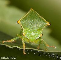 1109-0814  Buffalo Treehopper, Ceresa alta © David Kuhn/Dwight Kuhn Photography.