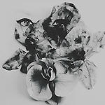 Artwork concept of female eyes hidden in dead orchids.