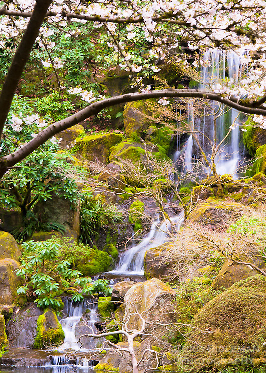 Heavenly Falls in the Spring seen through the cherry blossoms and surrounded by mossy rocks