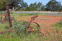 Antique farm equipment stands amid a field of bluebonnets and indian paintbrush