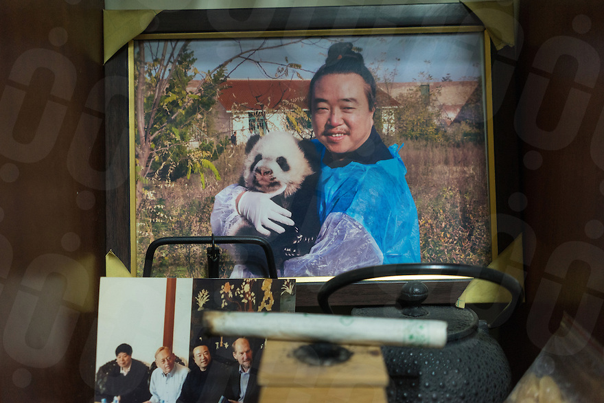 January 12, 2017 - Tayu village, Shaanxi (China). A photography of Taoist master Ren Xingzhi with a panda cub is seen inside his office in Louguantai temple. © Thomas Cristofoletti / Ruom for Sixthtone
