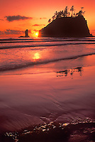 769300074 sunset at second beach coats the sand with a reddish glow at it sets behind the sea stacks in olympic national park washington
