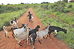 A boy herds goats in Matuli, a village in northern Malawi.