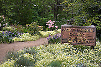 Entry sign by path to Arthur J. Menzies garden of California native plants among the meadowfoam wildflowers (Limnanthes douglasii,) at San Francisco Botanical Garden, California