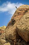Rock Climber, Red Rock Canyon