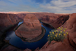 Horseshoe Bend with flowers in Page Arizona