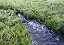 Meadow stream closeup at Blewett Pass, in the Wenatchee Mountains. Stock photography by Olympic Photo Group