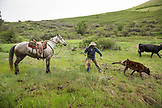 USA, Oregon, Joseph, Cowboy Todd Nash ropes a calf in the canyon by Big Sheep Creek in Northeast Oregon