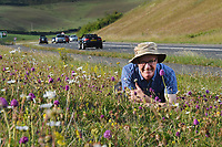 Verging on the spectacular - Motorists & nature lovers enjoy a spectacular display of orchids