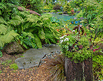 Vashon-Maury Island, WA: Stump planted with sedums leads to a salt water plunge pool surrounded by woodland perennial garden. Mosaci bird by artist Clare Dohna