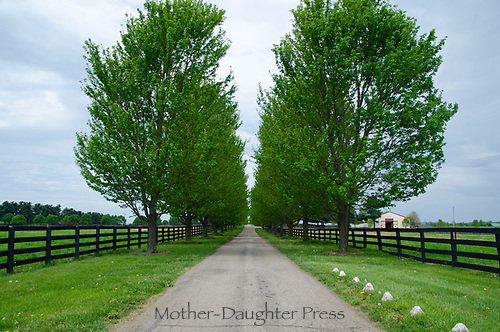 Entrance to Ramsey farm with tree lined driveway, KY