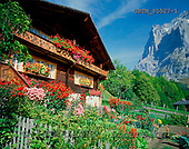 Tom Mackie, FLOWERS, photos, Swiss Chalet & Wetterhorn, Grindelwald, Switzerland, GBTM85527-1,#F# Garten, jardín